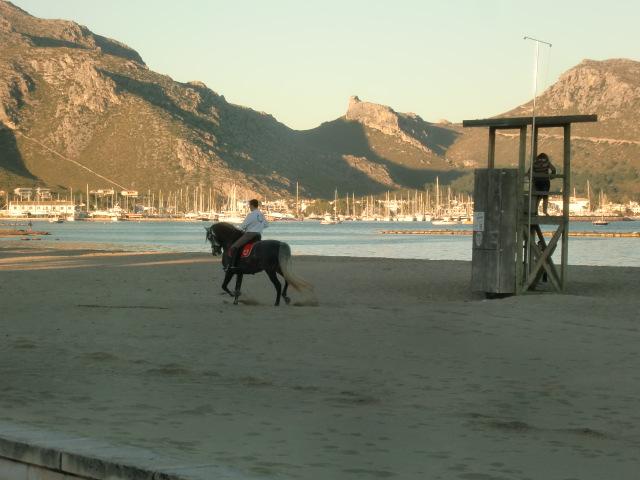 Pollenca -  Port de Pollenca - Cala Sant Vicenc - Reiter bewerten den Strand von Pollenca als einen der schönsten. Das Glück der Erde liegt bei einem Ausritt am Strand auf dem Rücken der Pferde.